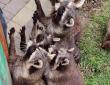 В гостях у тварин зоопарку «Лімпопо»